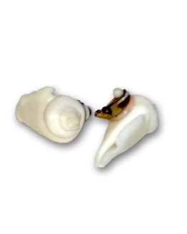 Manouk 3114-1 White Shell Oorbellen