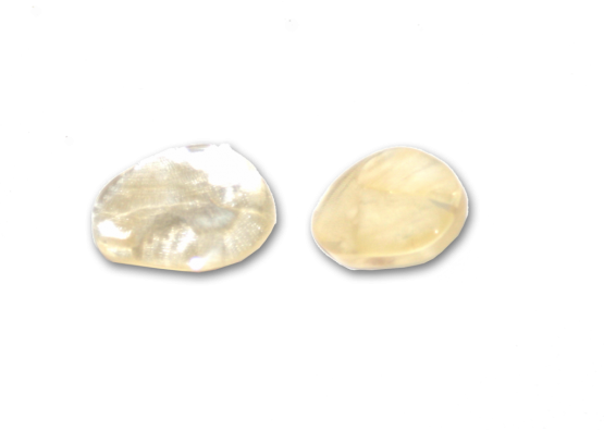 hh143-1 White Shell Oorbellen