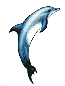 dolphin oorbel