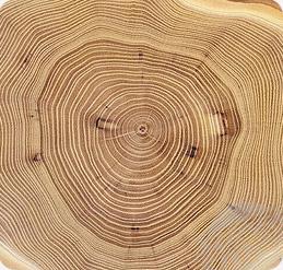 juli 2016 houten sieraden in het spotlicht